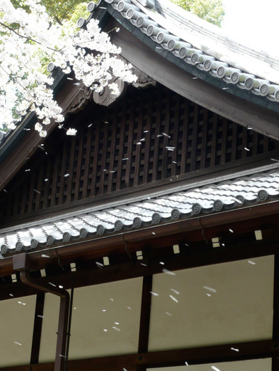 20120410sakura_1_2