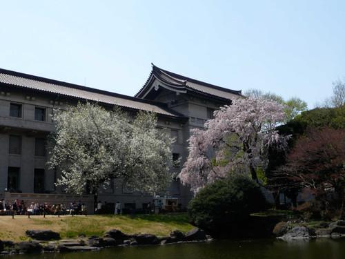 20120410sakura_5